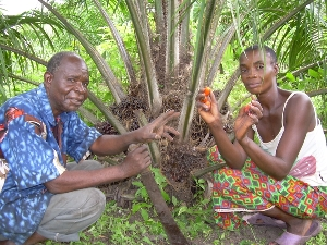 Tata et Mama Mbwanga showing off the first fruits of their palm oil trees across the river from the Baptist community's Vanga Mission.