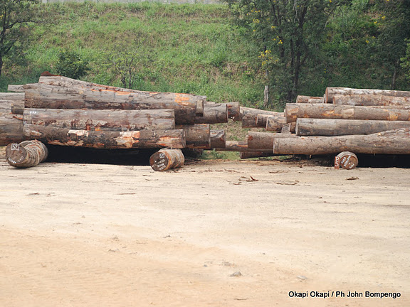 Future Forestry Practices in Congo will Affect the World's Health
