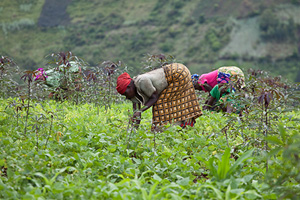 There are 80 million hectares of arable land in Congo